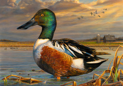 Above Is Christines Left And Matts Right Entries Congratulations To Jim Hautman On His Fifth Win Also Former Junior Duck Stamp
